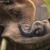 zootycoon_e3_elephants